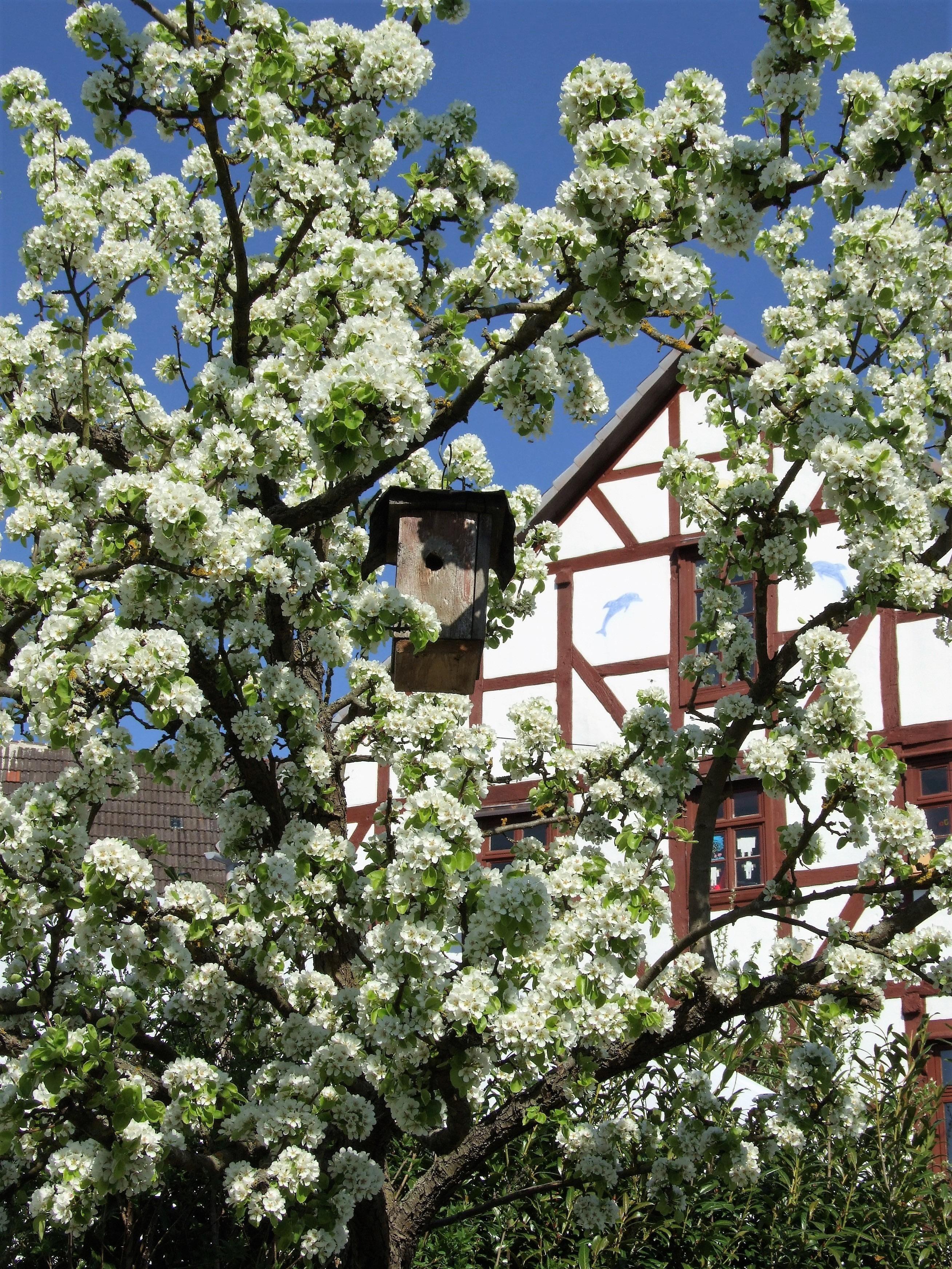 Momentaufnahme im Frühling. (Foto: Uli Klein)