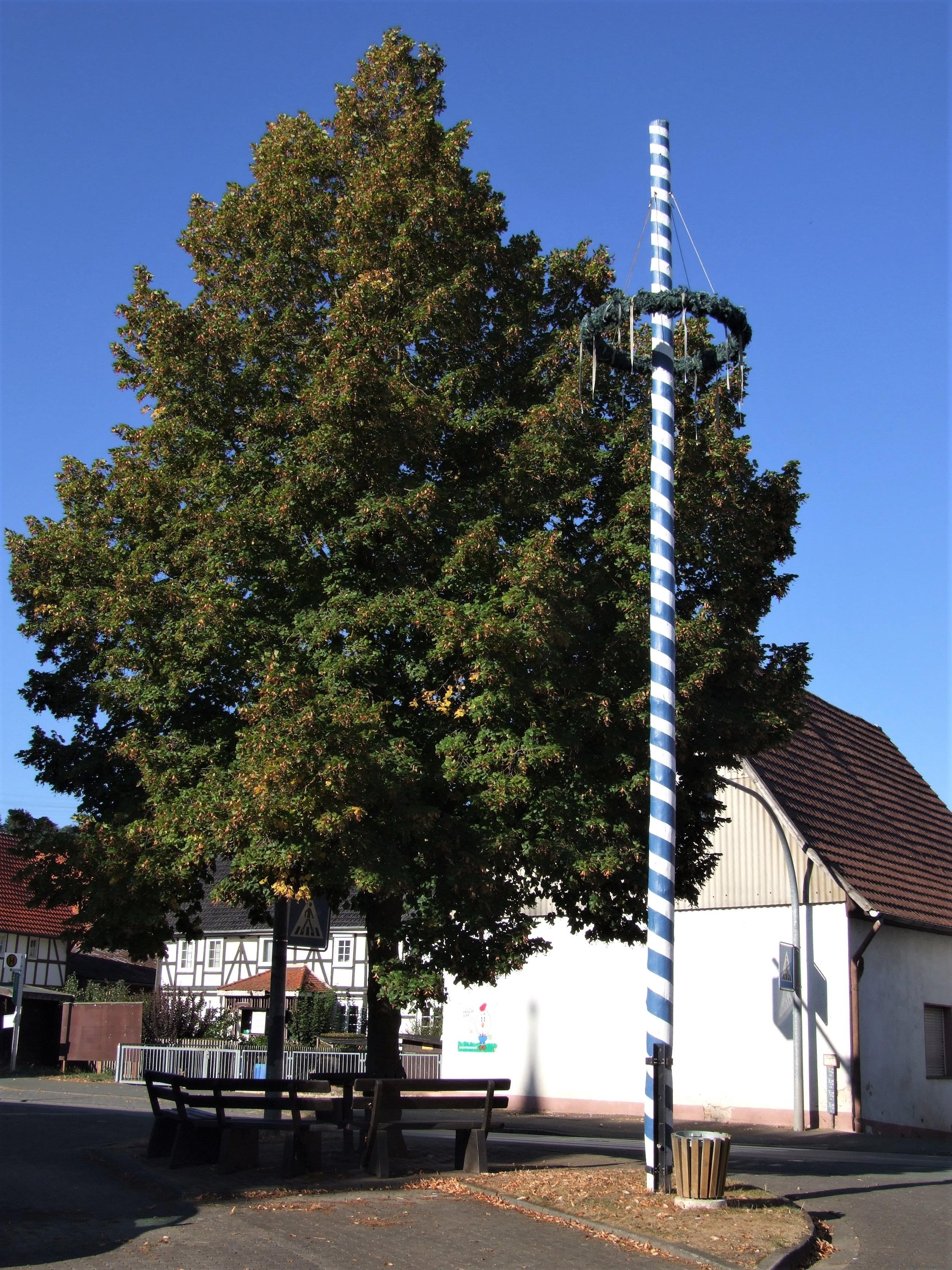Der Maibaum in der Dorfmitte von Mehlen. (Foto: Uli Klein)